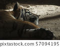 The Asia Tigers 57094195
