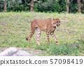 치타 아이 다마 동물 공원 57098419