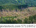 Forest with many fallen trees - Natural disaster in Italy 57116052