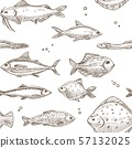 Fish sketch pattern background. Vector seamless 57132025