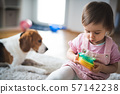 child, girl, infant 57142238