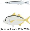 กั้งและปลาทู 57148730
