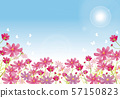 코스모스 : 코스모스 축제 코스모스 꽃 꽃잎 나비 태양 57150823
