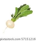水彩冬天菜蘿蔔 57151216