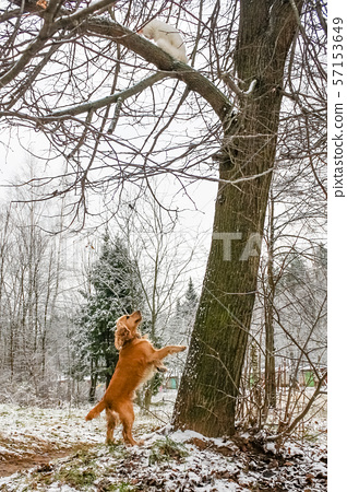 cat from a dog climbed a tree 57153649