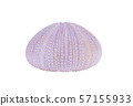 Sea urchin shell isolated on a white background 57155933