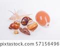 set of various mollusk shells on white background. 57156496