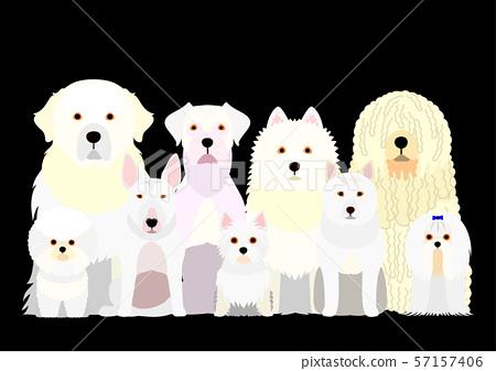 小組白色狗 57157406