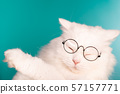 Domestic pet in round transparent glasses.Furry cat on blue background in studio 57157771
