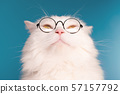 Domestic pet in round transparent glasses.Furry cat on blue background in studio 57157792
