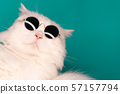 Luxurious domestic kitty in glasses poses on turquoise background wall 57157794