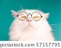 Domestic pet in round transparent glasses.Furry cat on blue background in studio 57157795