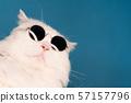 Portrait of white furry cat in fashion sunglasses. Studio photo with copy space 57157796
