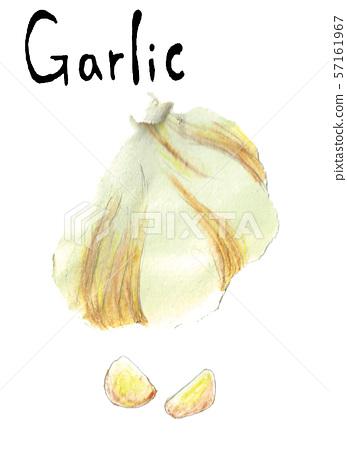 Garlic 57161967