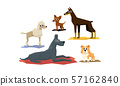 Funny Dogs of Different Breads Set, Cute Pet Animals Characters Vector Illustration 57162840