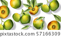 Apple fruits pattern Vector watercolor. Top view 57166309