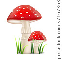 Red mushrooms vector realistic. Growing Detailed 57167363