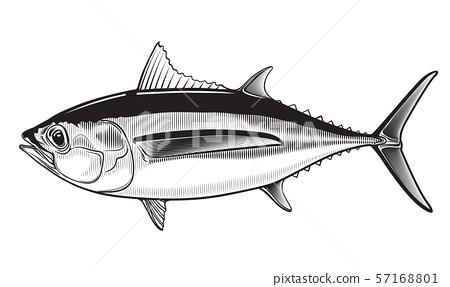 Tuna yellow fin big eye simple emlem 57168801