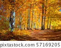 Autumn landscape - Warm Sunny day in Autumnal 57169205