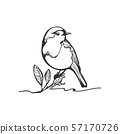 Robin sketch, black and white illustration 57170726