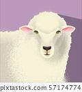 一隻羊 57174774