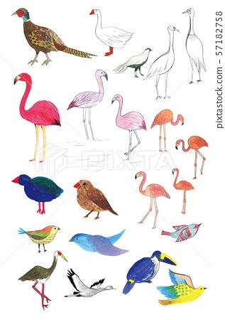 野雞,火鳥,鴨子,鳥圖 57182758