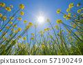 Canola flower & blue sky & solar Kasegawa (Saga) 57190249