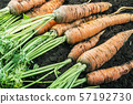 harvest ripe carrots lying on the ground in the garden 57192730