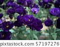 美丽的花土耳其 57197276