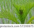 Warbler nest on treetop.   57200975