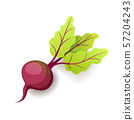 Sweet fresh beet with green leaf icon isolated, organic healthy food, vegetable, vector illustration 57204243