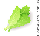 Fresh green salad leaf icon isolated, organic healthy food, vegetable, vector illustration. 57204246
