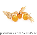 Cape gooseberry, physalis isolated on white background 57204532