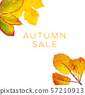 Autumn Sale, a discount banner or flyer design with vibrant yellow fall leaves and a place for text 57210913