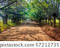 Road in Corcovado, Costa Rica 57212735
