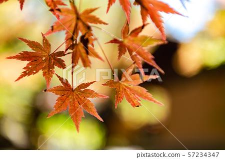 五颜六色的秋叶特写镜头秋天图象美好的风景美好的照片旅行 57234347