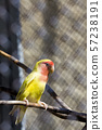 small beautiful parrot 57238191