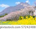 櫻花,油菜花,Yufudake 57242488