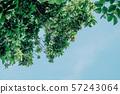 夏日的天空與綠葉 57243064