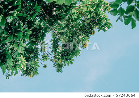 Summer sky with green leaves 57243064