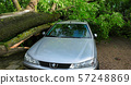 A tree fell on a car during a hurricane. Broken tree on a car close-up 57248869