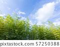 見沼 논 죽림과 하늘 57250388