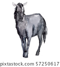 Horse farm animal isolated. Watercolor background illustration set. Isolated horse illustration 57250617