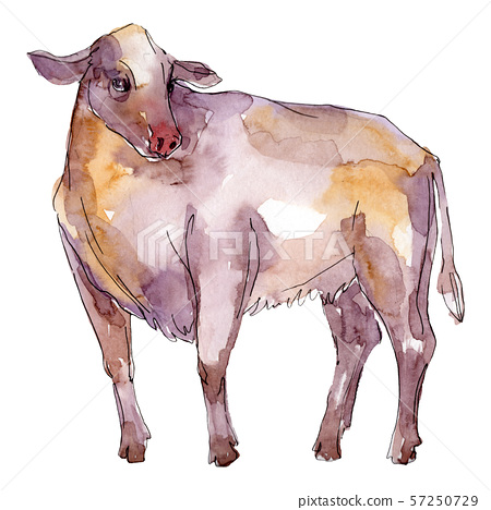Bull farm animal isolated. Watercolor background illustration set. Isolated bull illustration 57250729