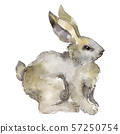Rabbit farm animal isolated. Watercolor background illustration set. Isolated rabbit illustration 57250754