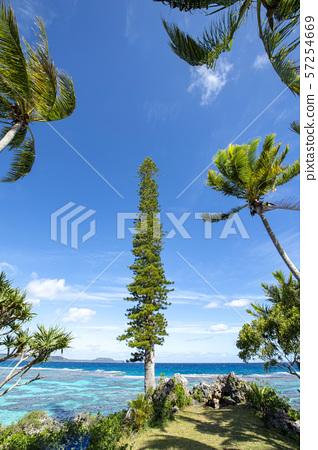 New Caledonia, Loyalty Islands, Male Island, Tadine Coast palm trees and cedar 57254669