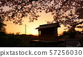 요시노 韋駄 천산 황혼 57256030