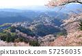 요시노 산에 천 그루 꽃 야구 라 전망대 57256035