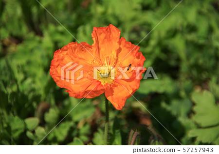 꽃 57257943
