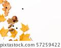 autumn leaves, chestnut, acorns and chokeberries 57259422